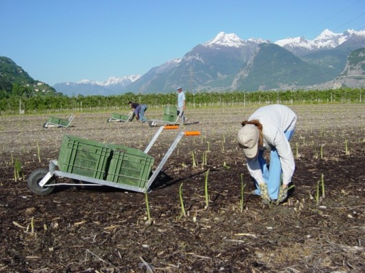 Photo Valais-terroir ©CVA