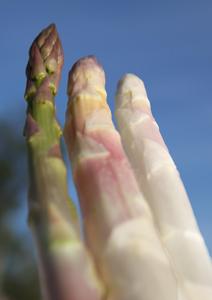 asperges-verte-violette-blanche