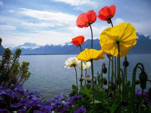 printemps_au_lac_leman ©HAKKI ARICAN