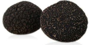 truffe melanosporum