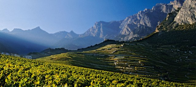 vineyards_of_valais_666_296