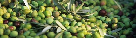 fruite-vert
