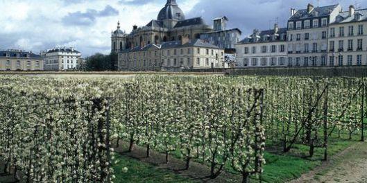 Potager de Versailles