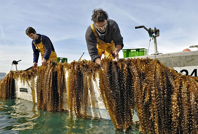 Photo c-weed-aquaculture