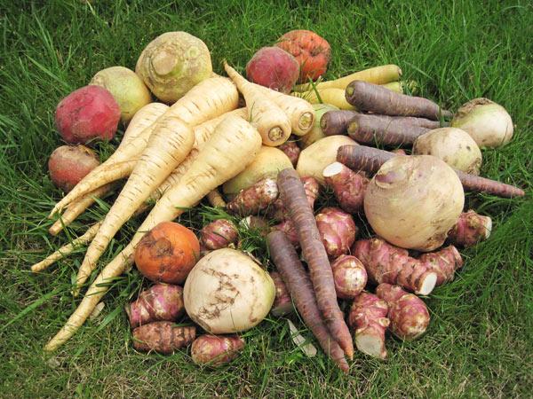 legumes-anciens-gamme (1)