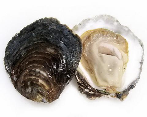 15-Oyster-Belon