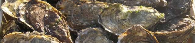 huîtres creuses