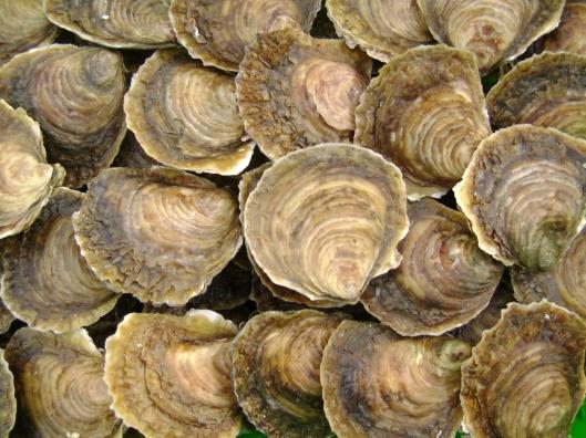 Huîtres_plates