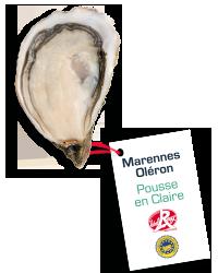 pousse_claire2
