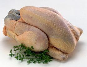 poulet-cru-a-pattes-noires-zvc75